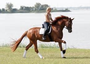 Equine Supplies
