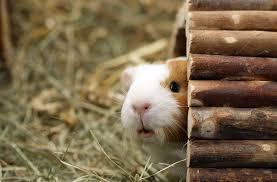 gerbil in shelter