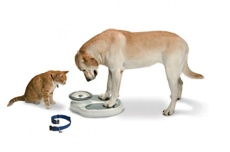 checking your dogs weight?